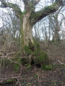 Ancient woodland and deadwood