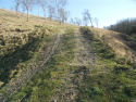 Chalk grassland damage by vehicles
