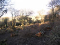 Coup coppiced in Wroxall Copse